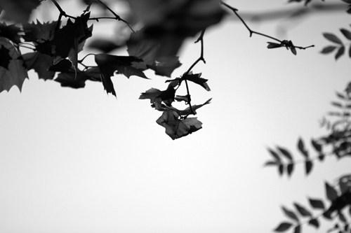 naturbild_gross_33